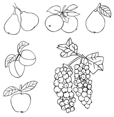 quince: illustration on white background fruits and berries: grapes, pear, Apple, quince, apricot, peach, plum
