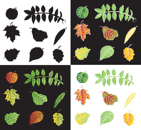 alder: illustration on black and white background leaves of the tree fall and the silhouette