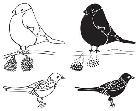 ashberry: illustration on white background hand drawing forty and bullfinch birds