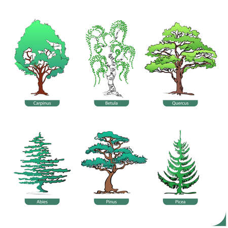 softwood: hand drawn collection of softwood and hardwood trees