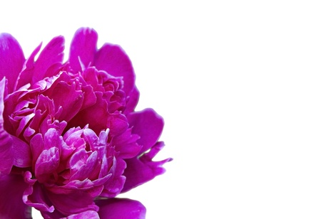 beautiful purple flower in the corner of a white background
