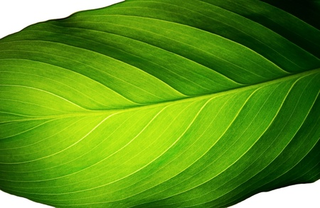 leaf close up: green leaf of a plant close up Stock Photo