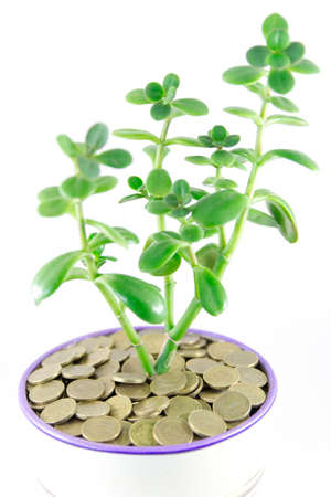 Money in a flowerpot on a white background