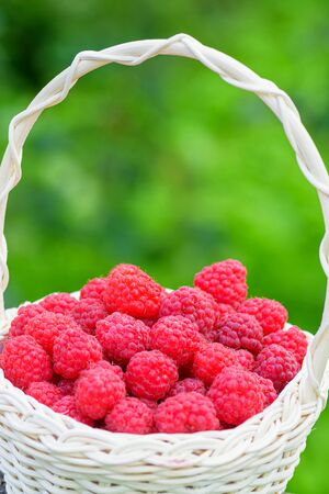 Red raspberries. Raspberries in basket in the garden. Ripe red berry. Fresh raspberries close-up. Healthy and tasty food. Imagens