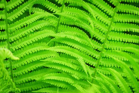 Green ecological wildlife concept background. Green leaf of fern in the sun. Wildlife concept. Green Leaf Fern. Ecology concept. Symbol Wildlife Ecology.
