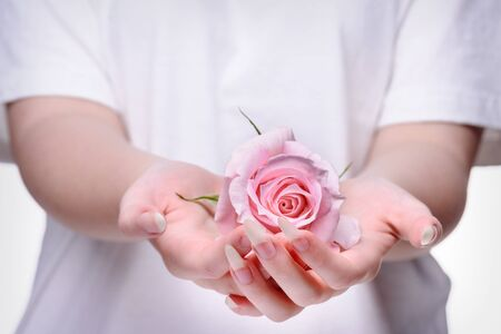 Rose in the hands girl. Beautiful girl hands holding pink rose. Natural manicure nails. Beautiful, natural fingernails. Nails, hands, rose close-up. 스톡 콘텐츠