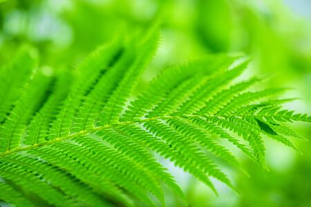 Wildlife Paportik Green Leaf. Green Sprig Fern with Leaves Blue Sky Background. Green leaf of fern in the sun.