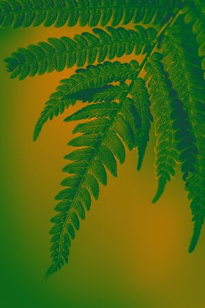 Toned background in green and yellow in the sunshine fern leaves. Green background for advertising wildlife. Eco concept. Symbol Wildlife Ecology.