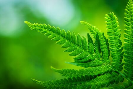 Fern Leaves Ecology Concept. Wildlife Paportik Green Leaf. Green ecological wildlife concept background.