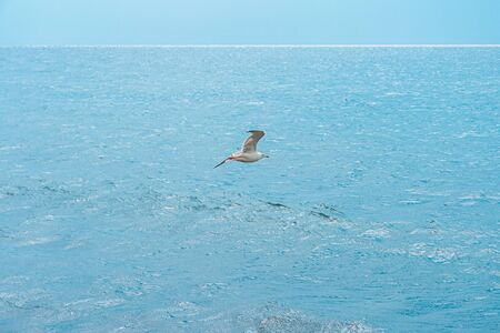 Sea gull fly against the blue ocean and the horizon line. Landscape of blue sea and blue sky on a sunny warm day.