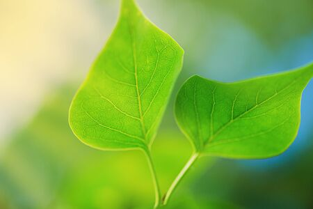 Green leaf blue background. Symbol Wildlife. Green leaf. Green Twig with Leaves Blue Sky Background.  Фото со стока