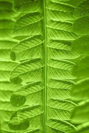 Green leaf. Green leaf of fern black background. Symbol Wildlife Ecology.  Selective focus. Soft focus on the background.