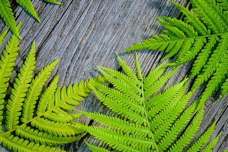 Green fern leaves wooden background. Green sprigs of fern with leaves wooden background with place for text. Symbol Wildlife Ecology.