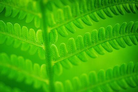 Fern Leaves Ecology Concept. Wildlife Paportik. Green Leaf Fern.