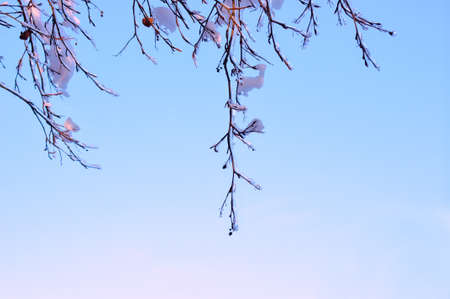 Branches of trees covered with snow and ice on a blue sky background photo