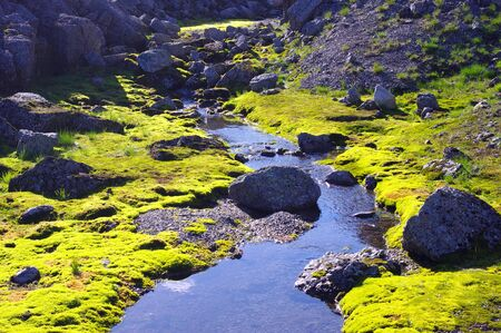 among: Stream in the mountain canyon among the moss and stones
