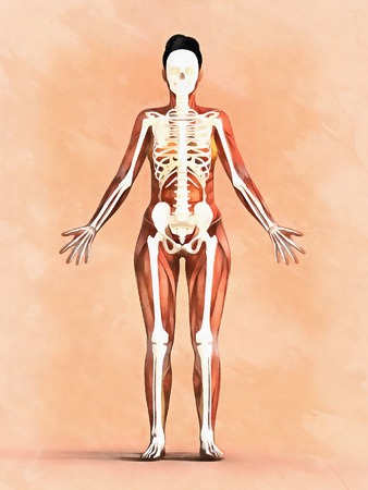 Woman skeleton. Anatomy of muscular system Imagens