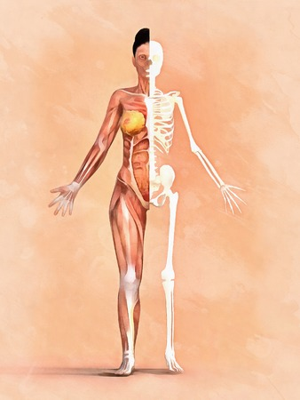 Woman skeleton. Anatomy of muscular system Stock Photo