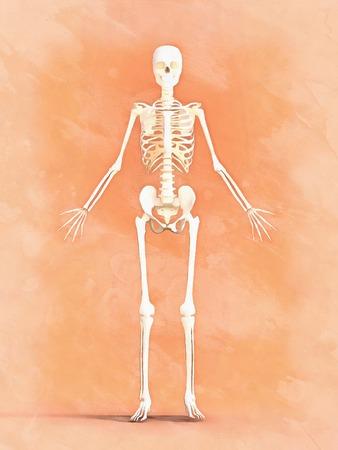 Woman skeleton. Flat illustration Stock Photo