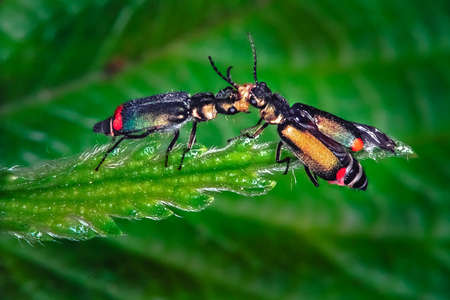 fighting two bugs in a leaf