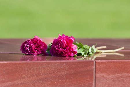 pfingstrosen: Pfingstrosen Blumen auf einer Granitplatte liegen