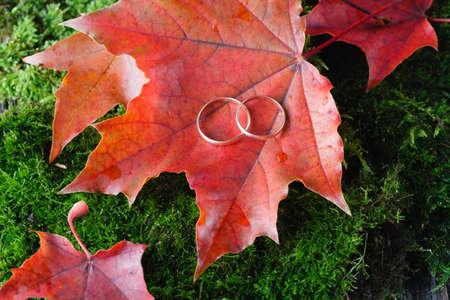bagging: Wedding idea. Decoration of two gold wedding ring