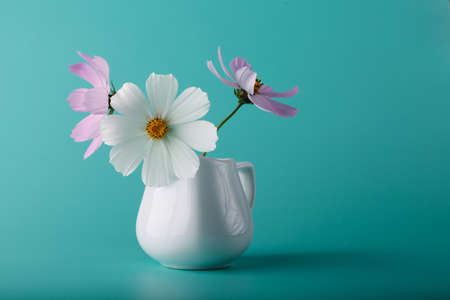 colorific: Cosmos flower шт milk jug on aqua color background Stock Photo