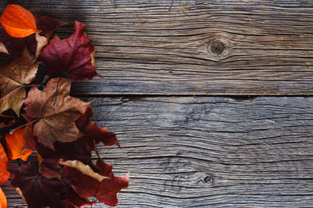 leaves frame: Fall leaves on rustic wooden background