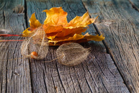 cape gooseberry: Fall background. Dry cape gooseberry and leaves on wood