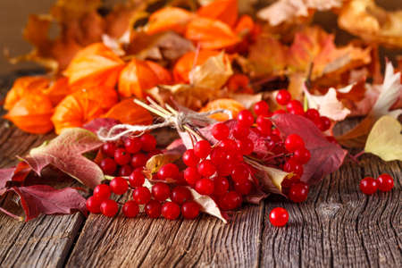 Fall harvesting viburnum on rustic wooden table Stock Photo