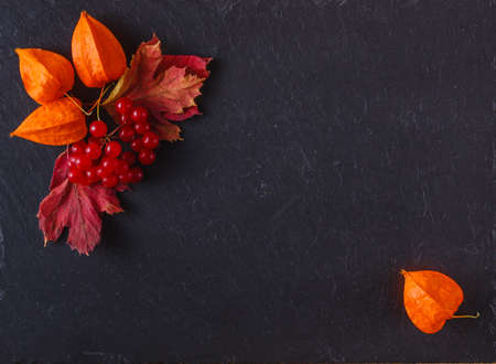autumn food: Red viburnum on black slate background with place to text