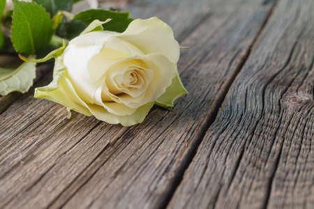 blanco: Rosa blanca sobre fondo de madera rústica