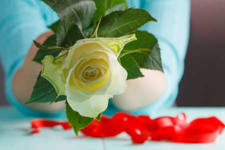 womans hands: Womans hands holding a white rose