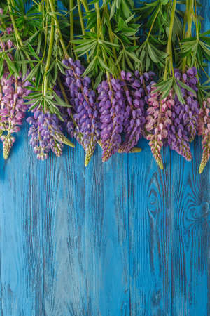 lupines: Fresh lupines arranged on old wooden background with copy space