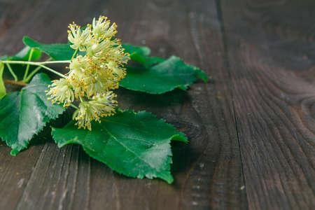 linden blossom: Linden blossom with green leaf on dark wooden table