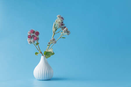 inulin: Burdock (Arctium lappa), burr garbage plant in vase