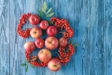 rowanberry: Apples and rowan berry. Autumn still life.