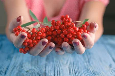 Woman offer Rowan berries on vintage blue wooden boards