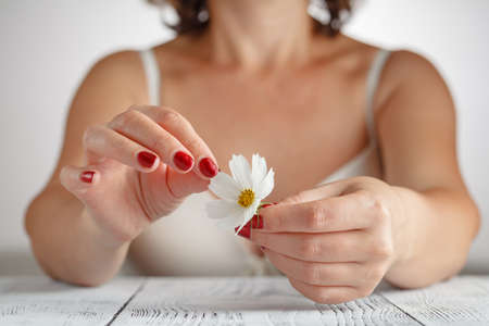 divination: Large white daisy for divination in human hand