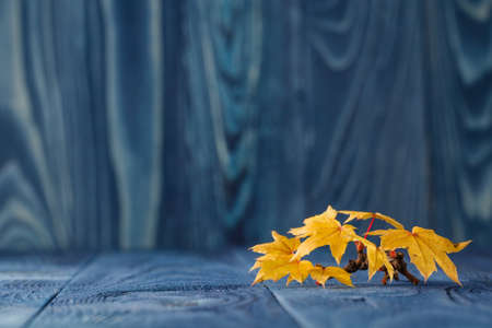 Fall leaves on blue background