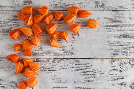 alkekengi: Autumn background with Delicate bright orange Physalis, also known as Chinese lantern and gooseberry