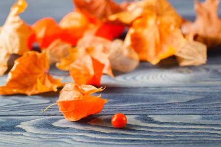 phisalis: Autumn simbols, Phisalys on the blue wood background