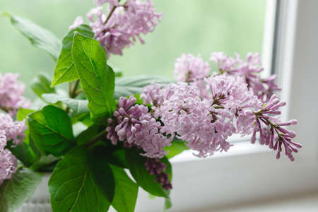 aged: blooming branch of lilac at the window