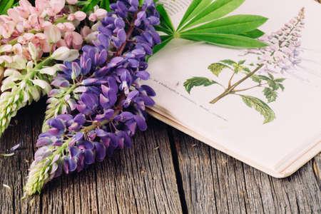 Botanical illustration. Medical plants. Old open book herbalist
