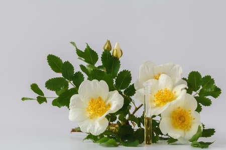 白い背景の美しい野生のバラの花束