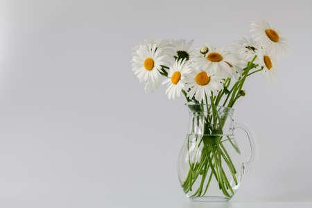 margerite: daisies summer white flower on white background Stock Photo