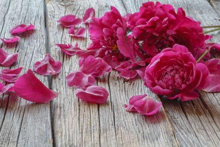 Beautiful fresh peonies on wooden surface Stock Photo