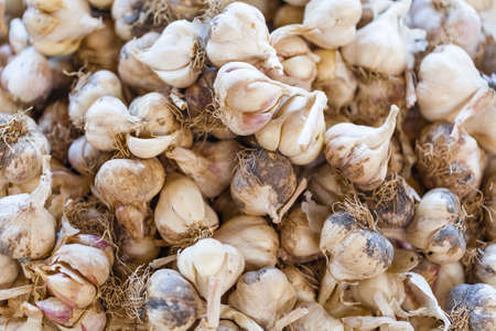 close up of garlic on market