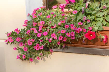 Red plant on windowsill outdoor in cafe. traditional European coffeehouse with green plants. decoration of an old house facade. flower box decoration outside in the center of city.