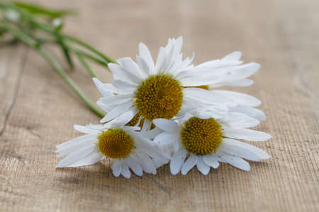 bouquet of daisies lying on old wooden fragment